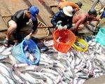 Giá cá tra nguyên liệu xuống thấp