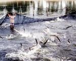 Cách chức, khai trừ đảng Vụ trưởng Vụ Nuôi trồng thủy sản