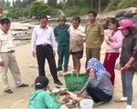 Thủ tướng chỉ đạo giải quyết vụ cá chết bất thường
