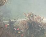 Rừng Hải Vân lại bùng cháy dữ dội