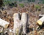 Phú Yên khởi tố vụ án phá hoại gần 110 ha rừng