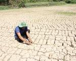 Hơn 9.000 tỉ đồng thiệt hại do hạn hán và xâm nhập mặn