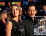 Johnny Depp - Amber Heard và cuộc chiến thú cưng