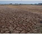 Hạn hán ở Ninh Thuận: Đất nứt toác, nước cạn kiệt