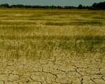 Hạn hán, xâm nhập mặn gây thiệt hại tại nhiều địa phương