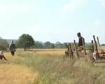 Nam Trung Bộ và Tây Nguyên mất 42.000 ha cây trồng do hạn hán