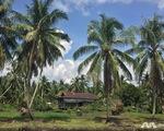 Malaysia: Máy bay trực thăng chở một số quan chức bị mất tích