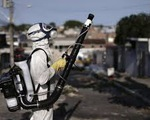Brazil bắt buộc báo cáo các trường hợp nhiễm virus Zika