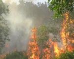 Quảng Ngãi: Cháy 10 ha rừng keo, thông