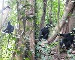 14 loài sinh vật ngoại lai đang đe dọa tấn công Phong Nha - Kẻ Bàng