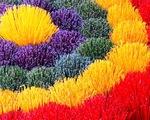 Làng hương Thủy Xuân, Huế vào mùa Tết