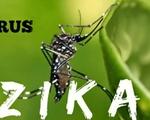 Virus Zika nguy hiểm như thế nào?