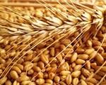 Pháp xuất khẩu lúa mỳ sang Việt Nam