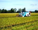 Tăng 10 - 20 giá lúa gạo Việt Nam sau áp dụng tiêu chuẩn SRP