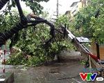 Hà Nội: Bão số 1 quật đổ nhiều phương tiện