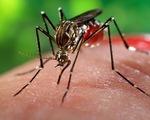 Mỹ chi gần 600 triệu USD chống virus Zika