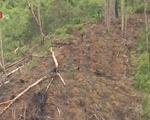 Mất hàng nghìn ha rừng vì dân di cư tự do tại Tây Nguyên