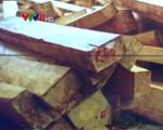 Quảng Nam: Bắt vụ vận chuyển gỗ pơ mu lớn tại Nam Giang