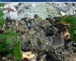 Bộ Y tế yêu cầu Bắc Ninh xác minh Núi rác thải y tế giữa làng ung thư