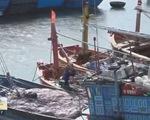 Cá chết hàng loạt, ngư dân treo niêu