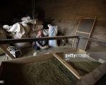 Vấn nạn ma túy nhức nhối tại Syria