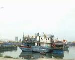 Tàu câu mực với 34 ngư dân bị tàu lạ đâm chìm