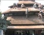 Đã Nẵng hỗ trợ chủ nhân tháo dỡ biệt phủ trên đèo Hải Vân