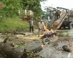 Lâm Đồng: Thông cổ thụ bật gốc kéo đổ 6 cột điện