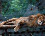 Khủng hoảng lương thực tại Venezuela, động vật trong sở thú chết đói