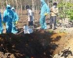 Xuất hiện ổ dịch cúm gia cầm H5N6 tại Kon Tum