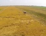 Xuất khẩu gạo trong 6 tháng đầu năm dự kiến tăng 12