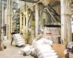 Xuất khẩu gạo đầu năm 2016 khởi sắc