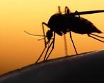 Mỹ: Virus Zika đáng sợ hơn so với dự kiến