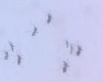 Khánh Hòa nhân rộng muỗi có khả năng chống virus Zika