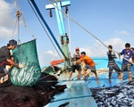 Hỗ trợ 70 phí bảo hiểm cho tàu đánh bắt xa bờ