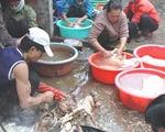 60% cơ sở giết mổ gia súc, gia cầm ở Hà Nội không đảm bảo vệ sinh