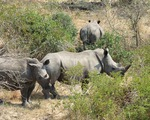 Thế giới quyết tâm chấm dứt nạn buôn bán động vật hoang dã