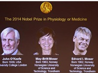 Nobel Y học 2014 thuộc về nghiên cứu não bộ