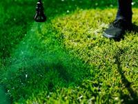 Chống hạn cho cỏ bằng cách… phun sơn