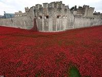 Anh: Tưởng niệm binh sỹ hy sinh trong chiến tranh thế giới