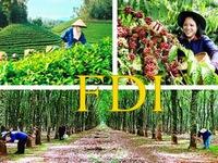 Vốn đầu tư FDI vào lĩnh vực nông nghiệp giảm 30 lần