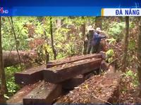 Núp bóng khai thác keo, lâm tặc tẩu tán hàng chục phách gỗ hiếm