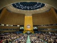 Hội nghị LHQ tìm giải pháp bảo vệ rừng