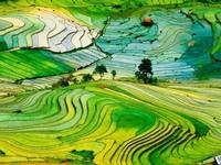Ruộng bậc thang Sa Pa lọt Top điểm đến đẹp nhất thế giới