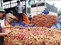 Mỹ cho phép nhập khẩu vải và nhãn tươi từ Việt Nam