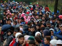 Hungary đóng cửa biên giới với Croatia để ngăn người di cư