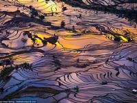 Ruộng bậc thang mùa nước đổ ở Trung Quốc đẹp như tranh