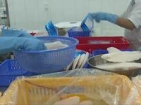 Mỹ siết chặt tiêu chuẩn cá tra, cá basa Việt Nam