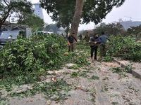 Hà Nội: Chặt hạ cây xanh do không đúng chủng loại cây đô thị