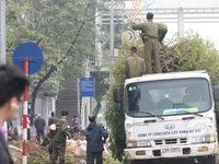 Thay thế toàn bộ cây xanh đường Nguyễn Chí Thanh bằng cây vàng tâm